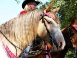 Northern Illinois Horse Fest